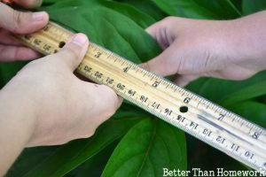Backyard Measurement Scavenger Hunt